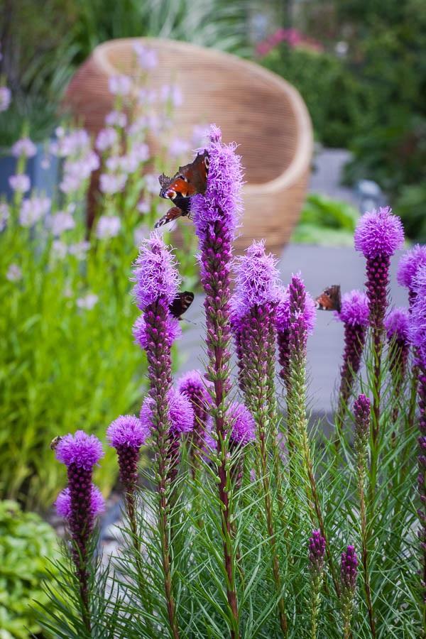 Atrakcyjne kwiaty – nowoczesny ogród