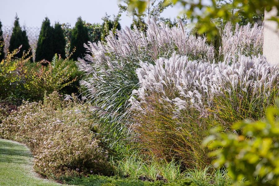 Zjawiskowy ogród – inspiracje