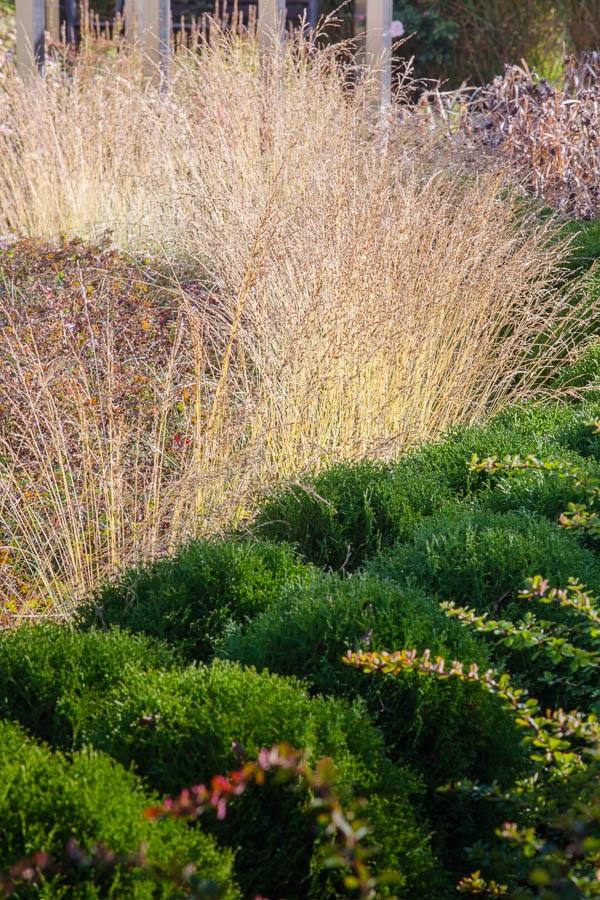 Wystrój ogrodu - ozdobne trawy