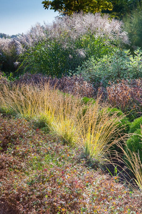 Aranżacja ogrodu – fotografia