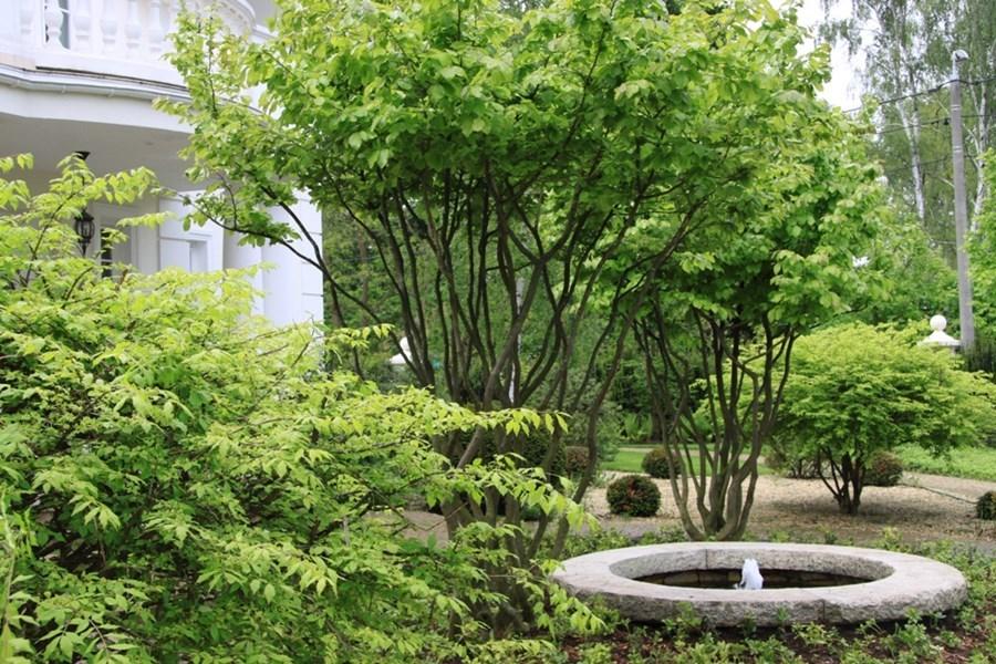 Krzewy ozdobne - fontanna ogrodowa