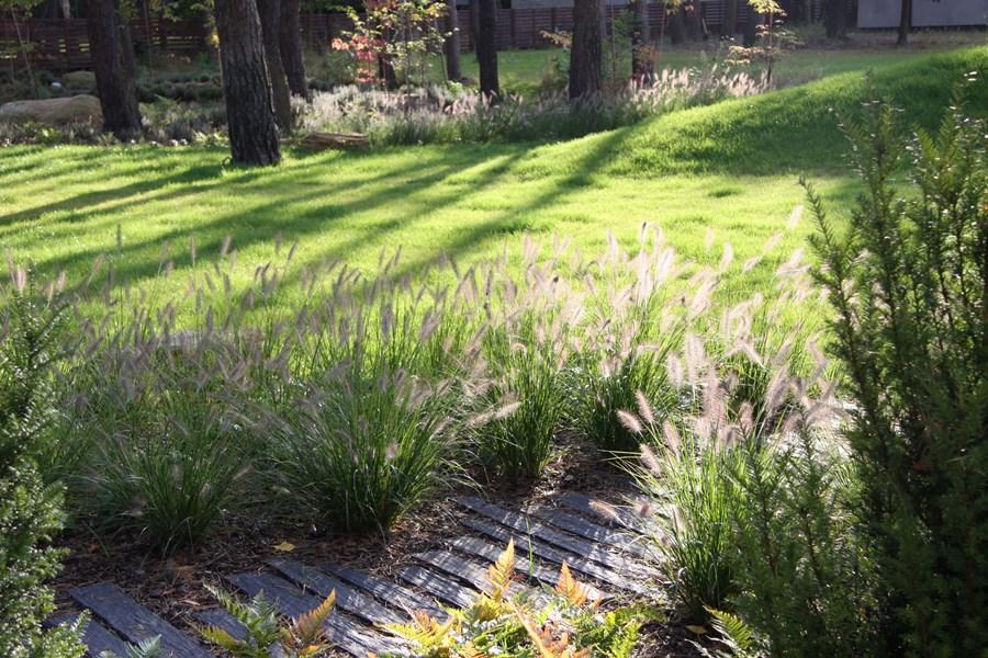 Leśny ogród w tradycyjnym wydaniu - Architektura, wnętrza, technologia, design - HomeSquare