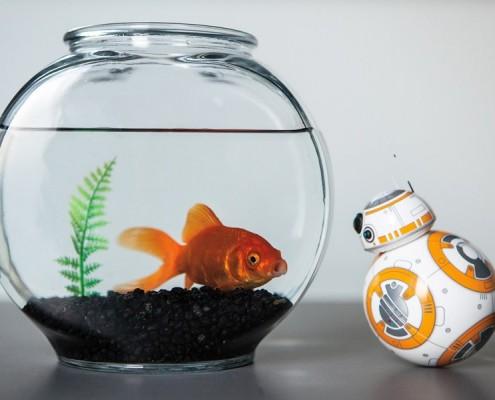 Droid BB-8 ze Star Wars