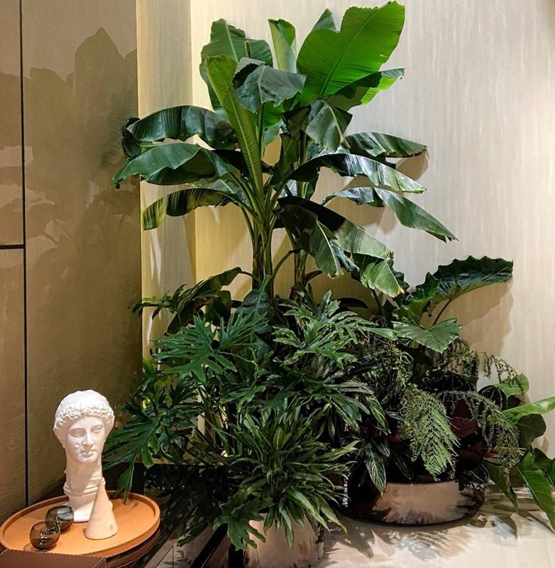 Motywy roślinne Isaloni 2017