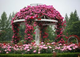 Altana ogrodowa obrośnięta różami
