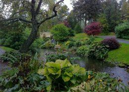 Aranżacja terenu przy sadzawce - ogród