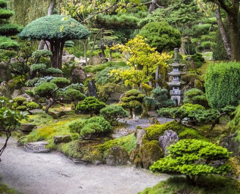 Drzewka bonsai w japońskim ogrodzie