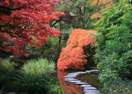 Japońskie ogrody inspiracje