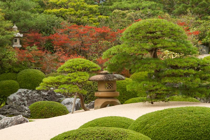 Japońskie ogrody roślinność