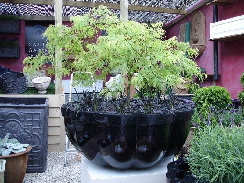 Ogród japoński donica