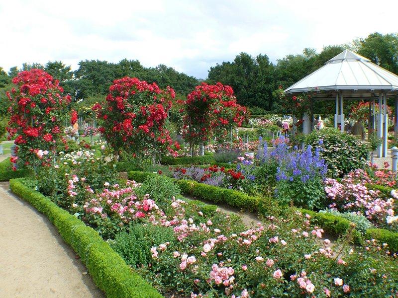 Różane aleje w antycznym ogrodzie