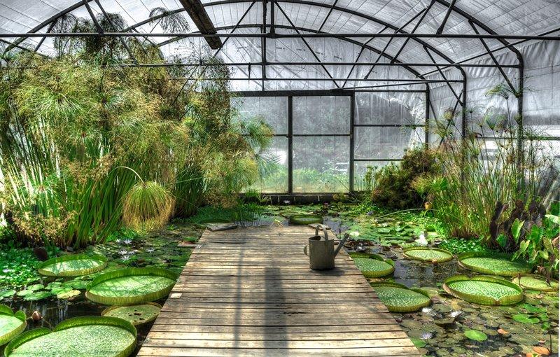 Tropikalny staw w szklarni